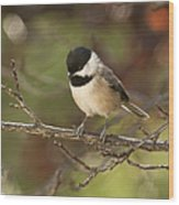 Autumn Colors Chickadee Wood Print