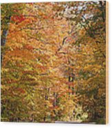 Autumn Colors - Colorful Fall Leaves Wisconsin IIi Wood Print