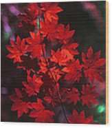 Autumn Colors Early Wood Print