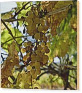 Autumn Colors In Wine Country Wood Print by Patricia Sanders