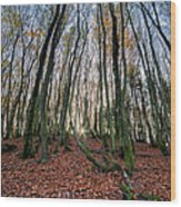 Autumn Colors In The Forrest Wood Print