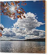 Autumn  Confidential  Wood Print by Bob Orsillo