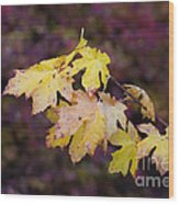 Autumn Contrast Wood Print