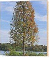 Autumn Cypress Tree Wood Print