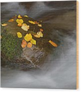 Autumn Detail Wood Print