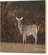 Autumn Doe Wood Print