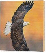 Autumn Eagle Wood Print