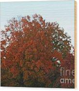 Autumn Eve Wood Print