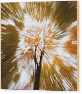 Autumn Explosion Wood Print by Dave Bowman