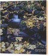 Autumn Fall Colors Starvation Creek State Park Wood Print