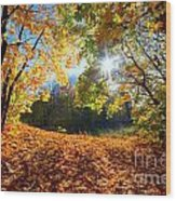 Autumn Fall Landscape In Forest Wood Print