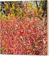 Autumn Flames Wood Print