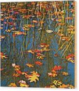 Autumn  Floating Wood Print by Peggy Franz