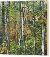 Autumn Forest Detail Wood Print