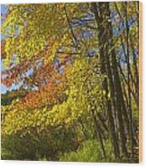 Autumn Forest Scene In West Michigan Wood Print