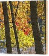 Autumn Forest Scene Wood Print