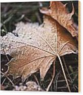 Autumn Frost Wood Print