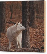 Autumn Gaze Wood Print