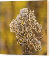 Autumn Goldenrod And A Poser Wood Print
