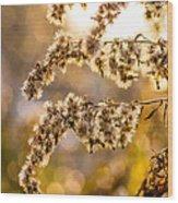 Autumn Goldenrod  Wood Print