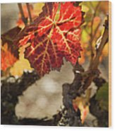 Autumn Grape Leaves Wood Print