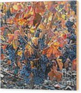Autumn Grapes Wood Print