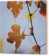 Autumn Grapevine Wood Print by Dry Leaf