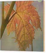 Autumn Grapevine Wood Print by Fraida Gutovich