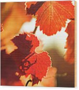 Autumn Grapevine Leaves Wood Print by Charmian Vistaunet