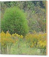 Autumn Grasslands Wood Print
