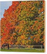 Autumn Grazing Wood Print