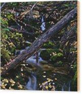 Autumn Greens Wood Print