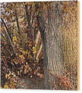 Autumn Hideaway Wood Print