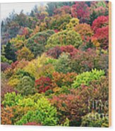 Autumn Highland Scenic Highway Wood Print