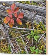 Autumn Highlights Wood Print