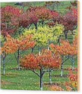 Autumn Hillside Orchard Wood Print