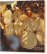 Autumn Hydrangeas I V Wood Print