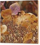Autumn Hydrangeas V Wood Print