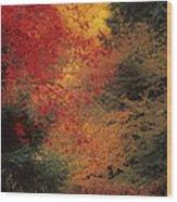 Autumn Impression Wood Print