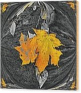 Autumn In Color Wood Print