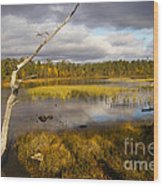 Autumn In Finland Near Inari Wood Print