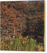 Autumn In Gruene Wood Print