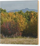 Autumn In Idaho Wood Print