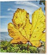 Autumn In Lyme Regis Wood Print