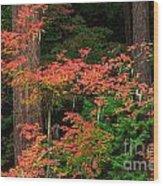 Autumn In Mount Rainier Forest Wood Print