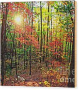 Autumn In South Carolina Wood Print