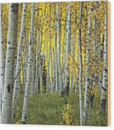 Autumn In The Aspen Grove Wood Print
