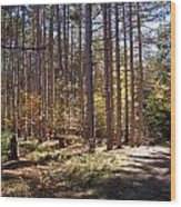 Autumn In The Pines Wood Print