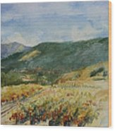 Harvest Time In Napa Valley Wood Print