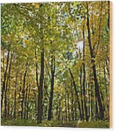 Autumn In Uw Arboretum In Madison Wisconsin Wood Print by Natural Focal Point Photography